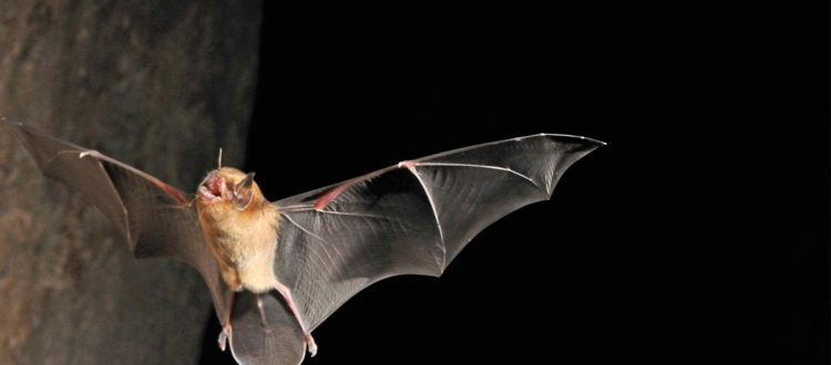 Bat Conservation Project Gets a Helping Hand