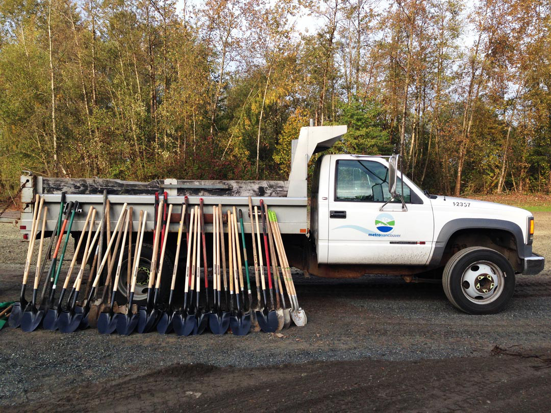 A Metro Vancouver White pick-up truck with many shovels leaned up against the back.