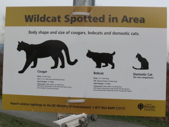 Wildcats Spotted in Area