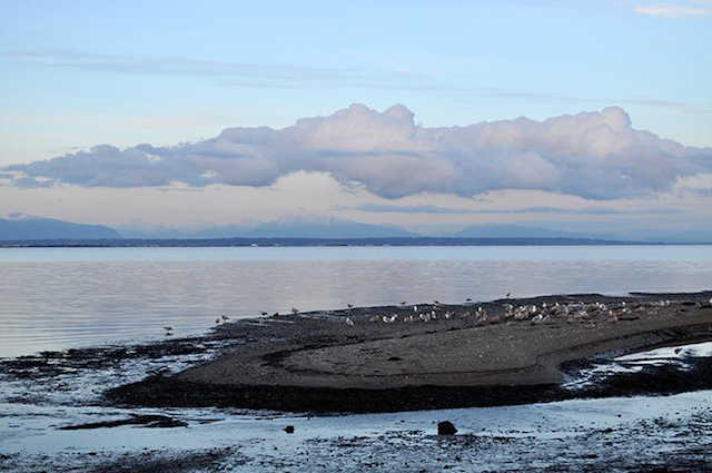 Boundary Bay Regional Park, hikes in Vancouver