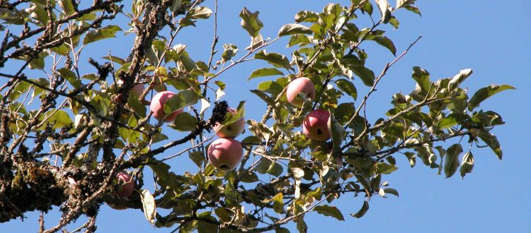 An Apple a Day Get Your Fill at Heritage Apple Day