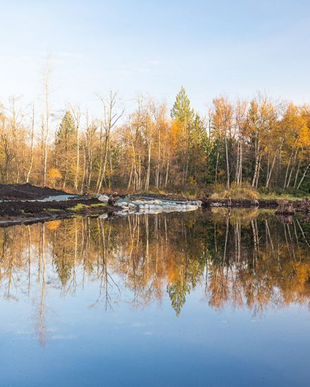 Natural pond with fall foliage